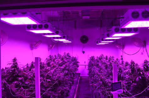 black led grow light wiring a grow room plumbing a grow room elsavadorla