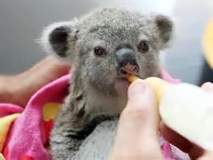 Baby Australian Animals