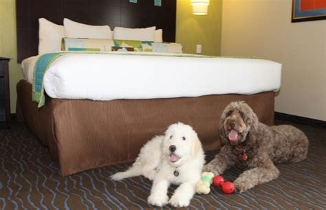 which are the most pet friendly u s hotel chains and