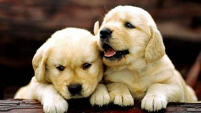 Puppies Adorable