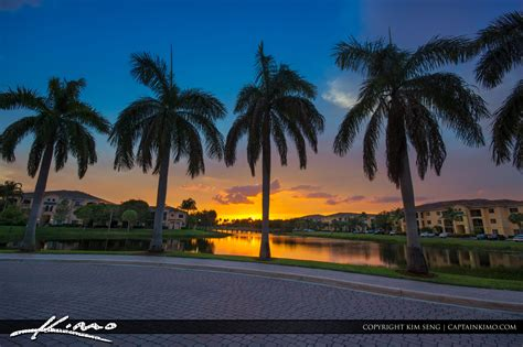 royal palm tree sunset palm gardens