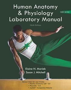 Human Anatomy Lab Manual Marieb Mitchell
