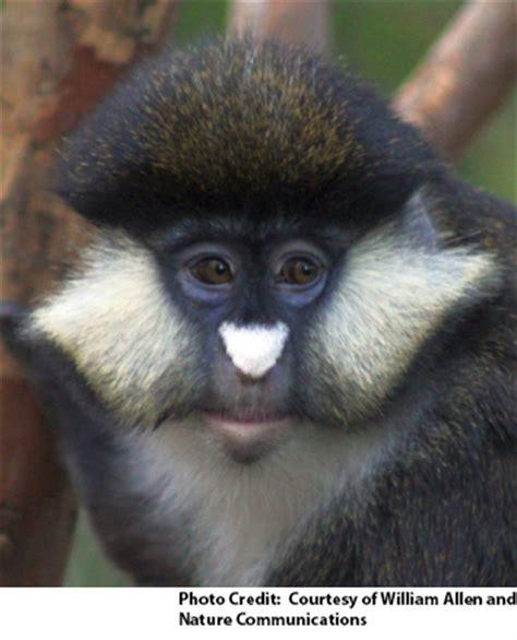 To Avoid Interbreeding, Monkeys Have Undergone Evolution