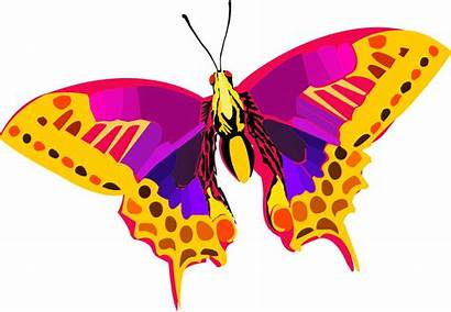 Colorful Clipart Insect Butterfly Abstract Clip Vector