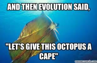 Octopus Meme - evolution meme memes