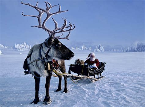 animal rights caigners protest reindeer christmas