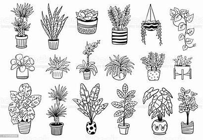 Plants Indoor Pots Outdoor Drawing Plant Vector
