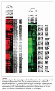 Gene Expression  Analysis And Drug R U0026d