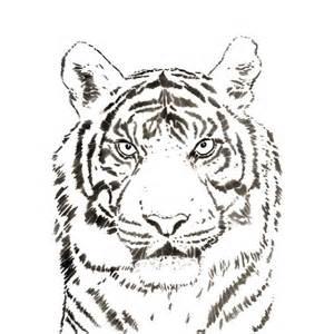 schablonen für wandgestaltung hansa airbrush schablone tiger wildlife gross xl 410190