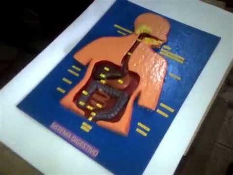 maqueta sistema digestivo youtube