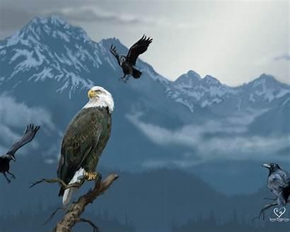 Hawk Eagle Wallpapers Animal Literature Px Wallpapersafari