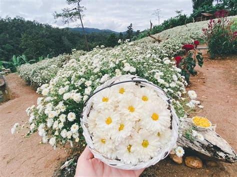 เที่ยวสวนดอกไม้เชียงใหม่, สวนดอกไม้สวยๆ เชียงใหม่ - เรื่อง ...