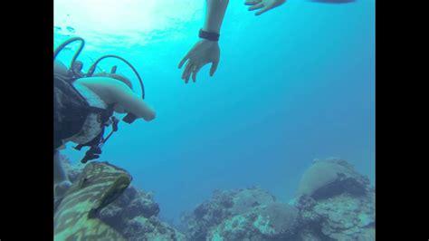 grouper attack