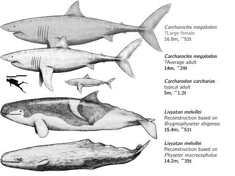 Livyatan Megalodon Comparison.jpg
