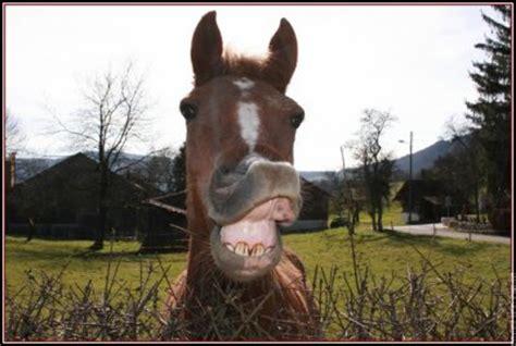 blog de le  drole cheval blog de le  drole