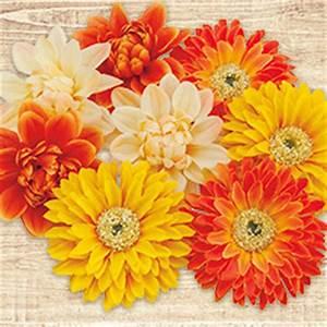 Bastelshop Auf Rechnung : floristik floristikbedarf buttinette bastelshop ~ Themetempest.com Abrechnung