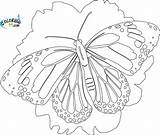 Butterfly Coloring Pages Monarch Detailed Printable Adults Butterflies Colouring Sheets Adult Coloring99 Bing Printables Unicorn Colors Popular sketch template