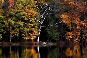 Elevation of Crawford Rd, Narrowsburg, NY, USA ...  Fall