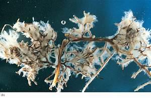 Arbuscular Mycorrhizal Associations