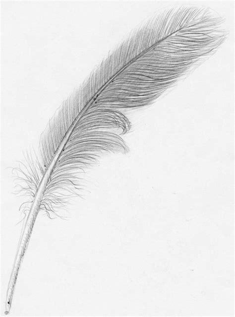 plume d oiseau dessin comment dessiner une plume d oiseau