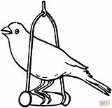 Canary Coloring Pages Bird Template Printable Drawing Birds Supercoloring Animal Popular Coloringhome sketch template