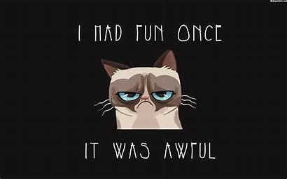 Meme Cat Quotes Grumpy Wallpapers Baltana Resolution