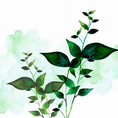Watercolor Psd Elements Korea Leaves Layered Nature
