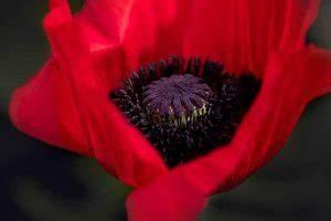 Welche Blumen Kann Man Essen : schneckenfutter was fressen schnecken was nicht tipps ~ Watch28wear.com Haus und Dekorationen