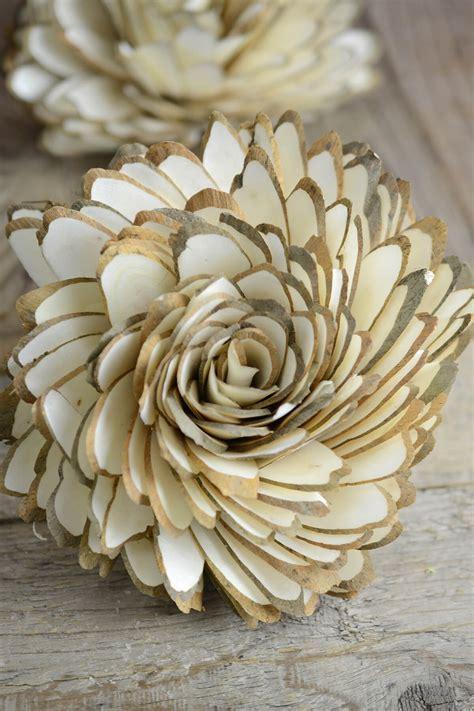 large  sola dahlias cm sola flowers