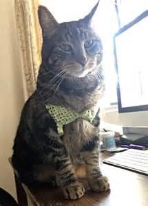 cat lingere cats wearing gallery worldwideinterweb