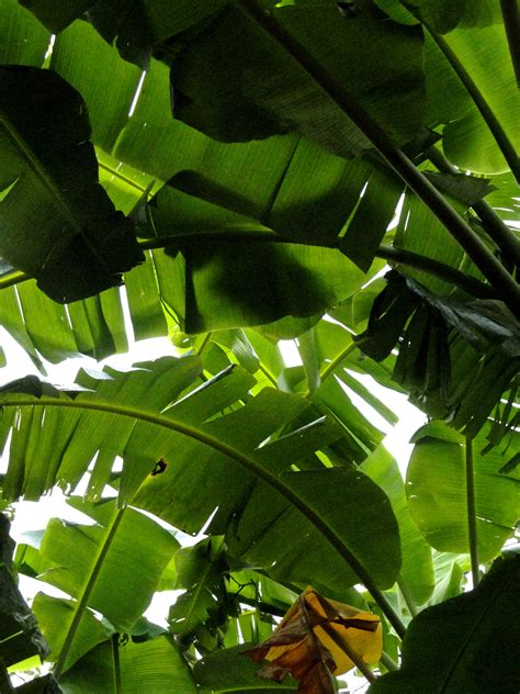 simple floor banana leaves formal divisions and surface patterns
