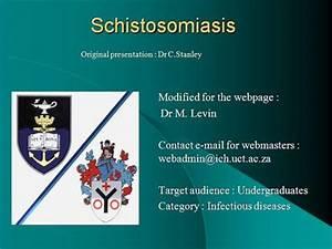 Schistosomiasis.Ppt -authorSTREAM Cercarial Dermatitis