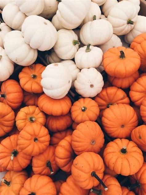 Fall Backgrounds Pumpkins by Bildresultat F 246 R Pumpkins Favorite Season