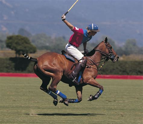polo ponies wellington sport horse pony equestrian play player hardest injected equine contact supplement