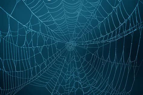 spider web  weneedfun