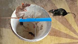 Rat Trap Homemade In Cambodia