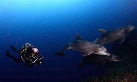 guide  diving  socorro mexico