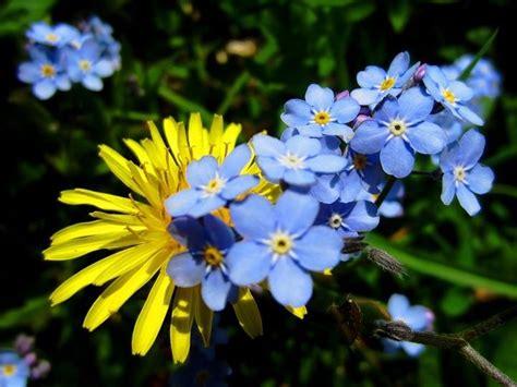 flowers of sweden image gallery swedish flowers