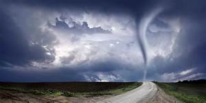 The Attack Of The Tornado Fungus