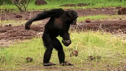 Animals Wild Spy Thirteenwnet Qanon Gifs Dance