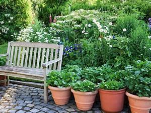 Balkon Bäume Im Topf : erd pfel wachsen auch auf dem balkon ploberger ~ Frokenaadalensverden.com Haus und Dekorationen
