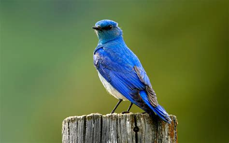mountain blue bird x free images at clker com vector