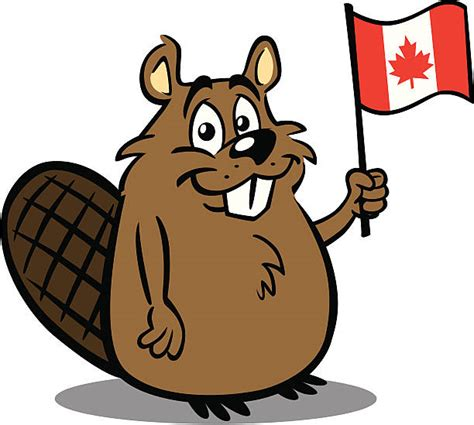 Beaver Clip Royalty Free Beaver Clip Vector Images