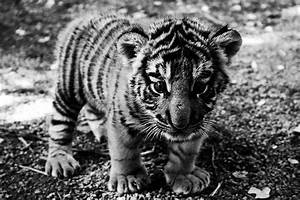 baby cute adorable Black and White Awesome animal lovely ...