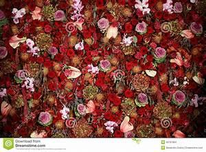Mur De Fleurs : belle texture naturelle de mur de fleur photo stock image 46797964 ~ Farleysfitness.com Idées de Décoration