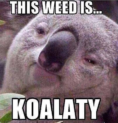 Pot Meme May Roundup 21 Hilarious Memes Stoner Motivation