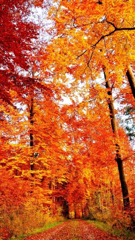 Autumn Wallpapers Cozy by Iphone Orange Fall Nature Autumn Warm Seasons Cozy Leaves