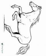 Coloring Horse Printable Running Horses Ausmalbilder Fohlen Sheet Stallion Sheets Colts Malvorlagen Pferd Colouring Konabeun Dirt Bike Raisingourkids Blogx Drawing sketch template