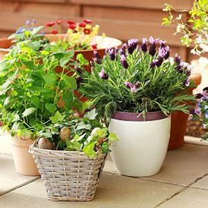 Online Pflanzen Kaufen : pflanzen online kaufen balkonpflanzen online bestellen ~ Watch28wear.com Haus und Dekorationen