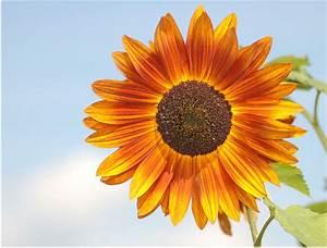 Bilder Bäume Gemalt : wie gemalt foto bild pflanzen pilze flechten bl ten kleinpflanzen sonnenblumen ~ Orissabook.com Haus und Dekorationen